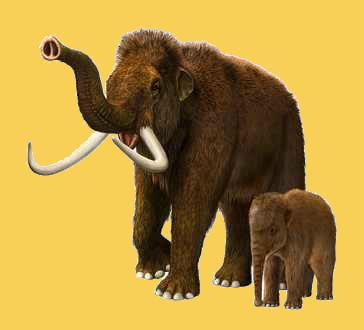 Mammut mit Jungem