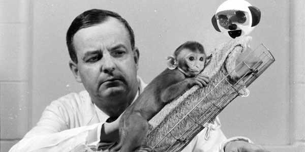 Harry Harlow und seine künstlichen Affenmütter