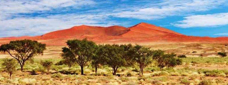 Afrikanische Savanne – die Wiege der Menschheit