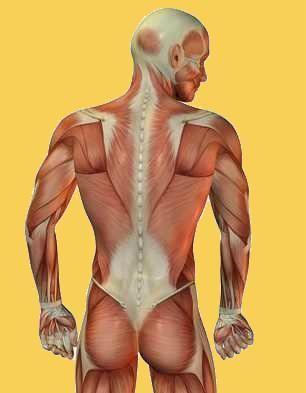 Die komplizierte Bemuskelung verlangt eine sensible Steuerung
